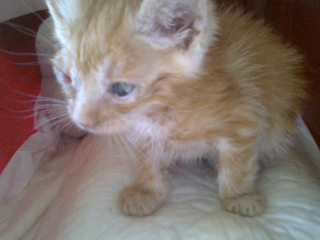 Mισοτυφλο μωρο γατακι... - Σελίδα 2 1887
