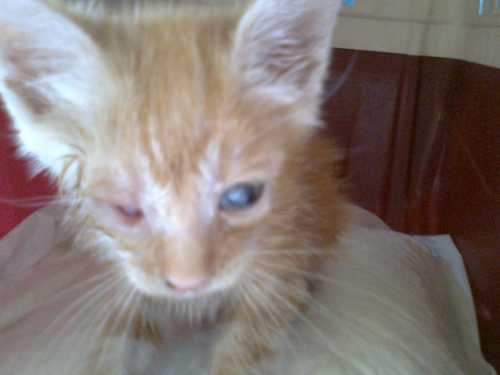 Mισοτυφλο μωρο γατακι... - Σελίδα 2 1888
