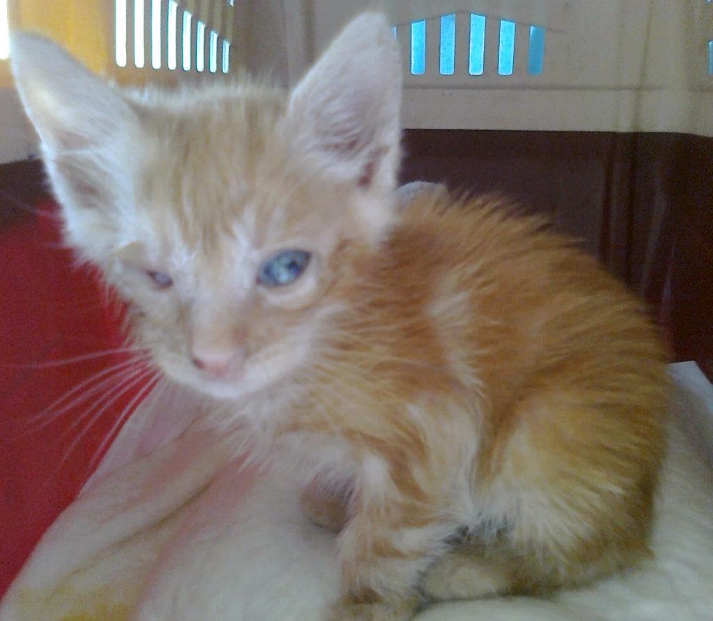 Mισοτυφλο μωρο γατακι... - Σελίδα 2 1889_001