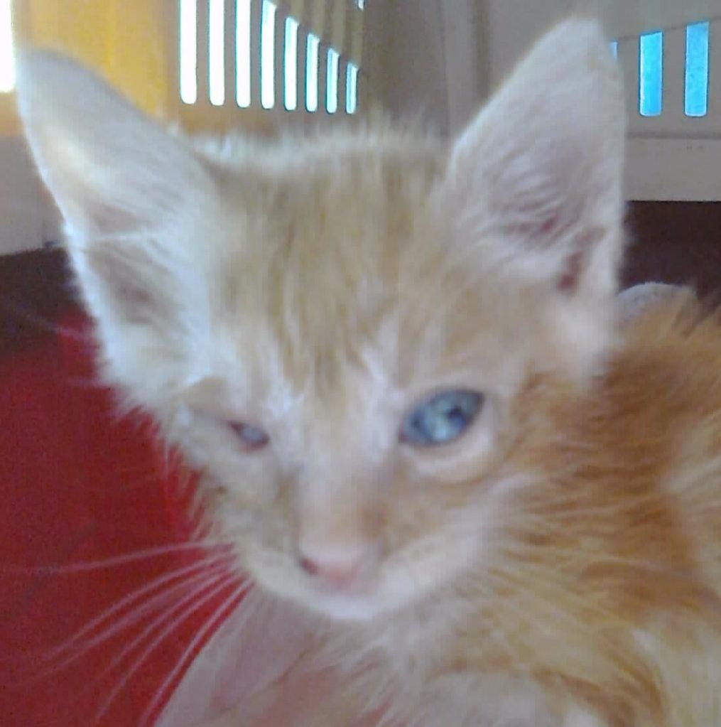 Mισοτυφλο μωρο γατακι... - Σελίδα 2 1889_001_001