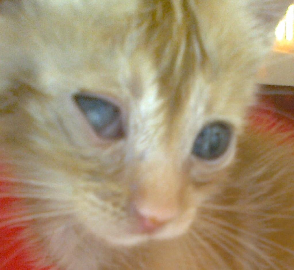 Mισοτυφλο μωρο γατακι... - Σελίδα 2 1894_001