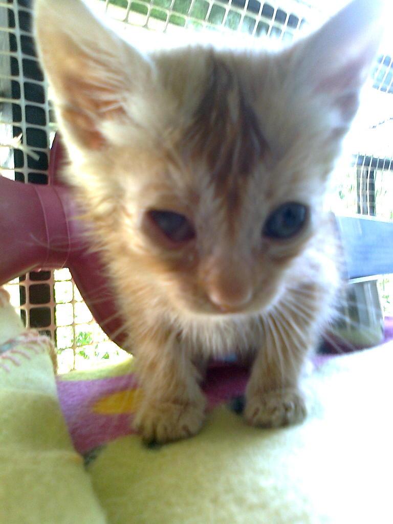 Mισοτυφλο μωρο γατακι... - Σελίδα 2 1895