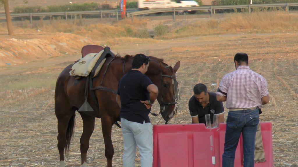 Feria Arahal 2012: Concurso de doma vaquera de caballos 27d40f86