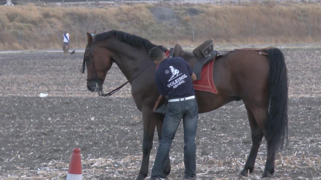 Feria Arahal 2012: Concurso de doma vaquera de caballos 2a913061