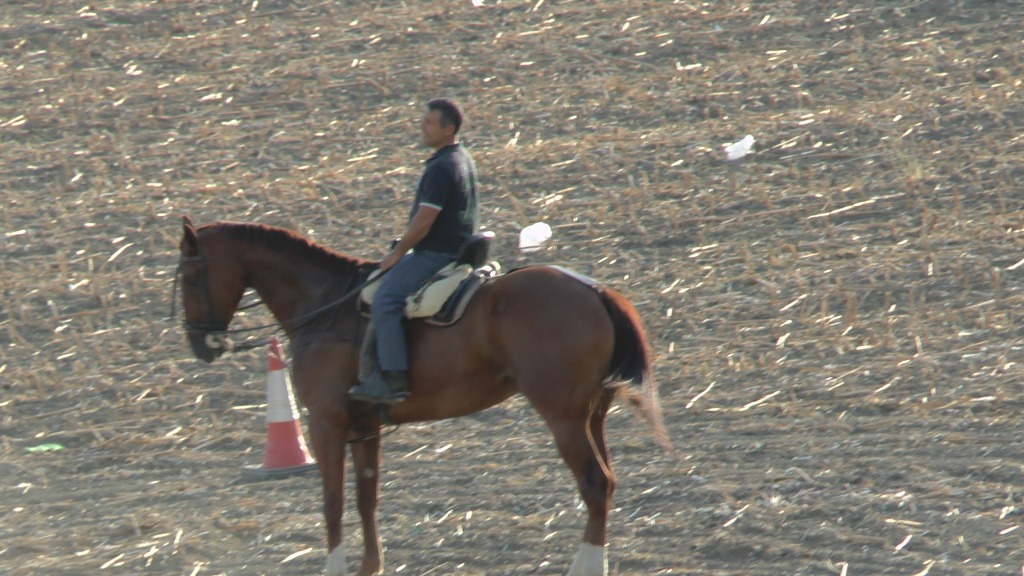 Feria Arahal 2012: Concurso de doma vaquera de caballos 2b421eaf