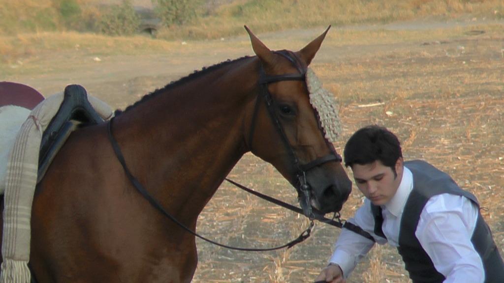 Feria Arahal 2012: Concurso de doma vaquera de caballos 71b61ab6