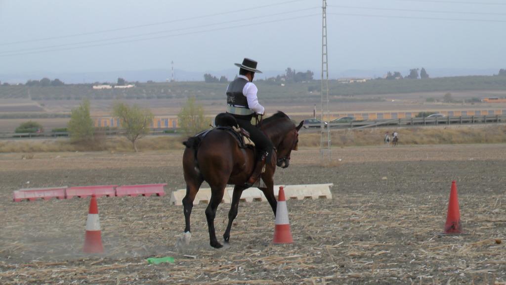 Feria Arahal 2012: Concurso de doma vaquera de caballos 73d58a11