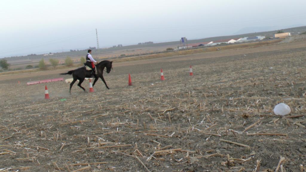 Feria Arahal 2012: Concurso de doma vaquera de caballos 7553c297