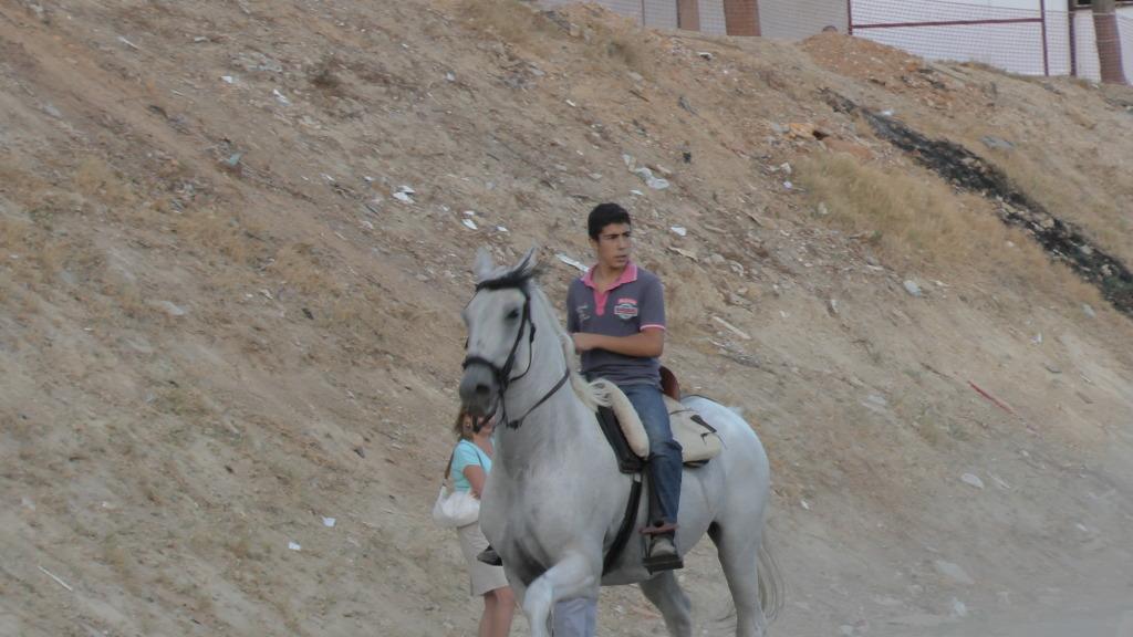Feria Arahal 2012: Concurso de doma vaquera de caballos 7ec17b42