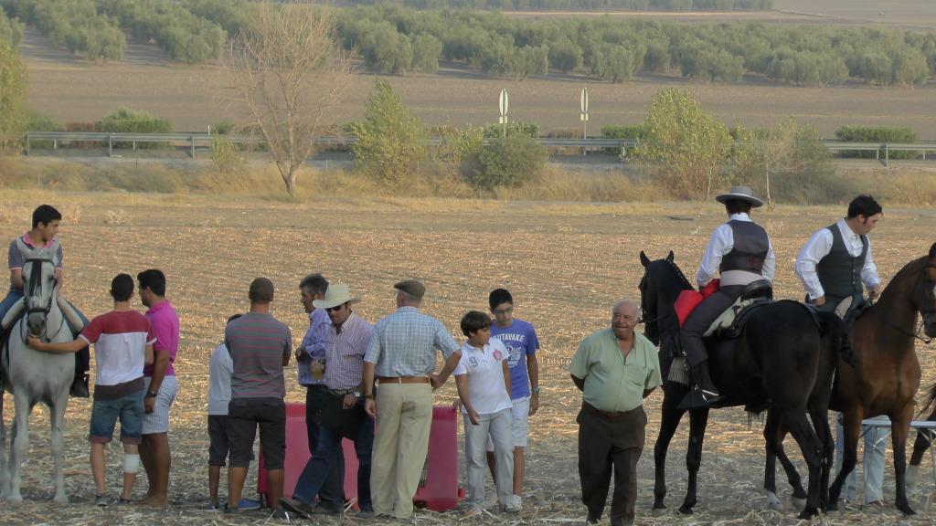 Feria Arahal 2012: Concurso de doma vaquera de caballos 95925f17