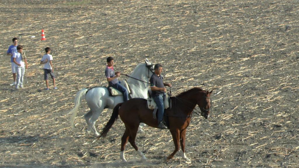 Feria Arahal 2012: Concurso de doma vaquera de caballos A10ae365