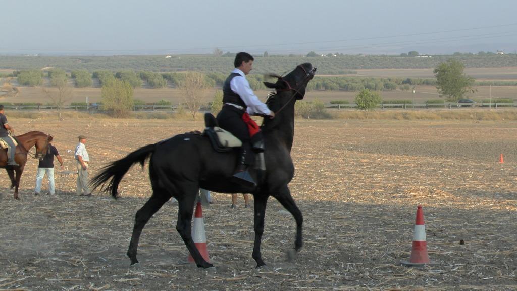 Feria Arahal 2012: Concurso de doma vaquera de caballos A59634e9
