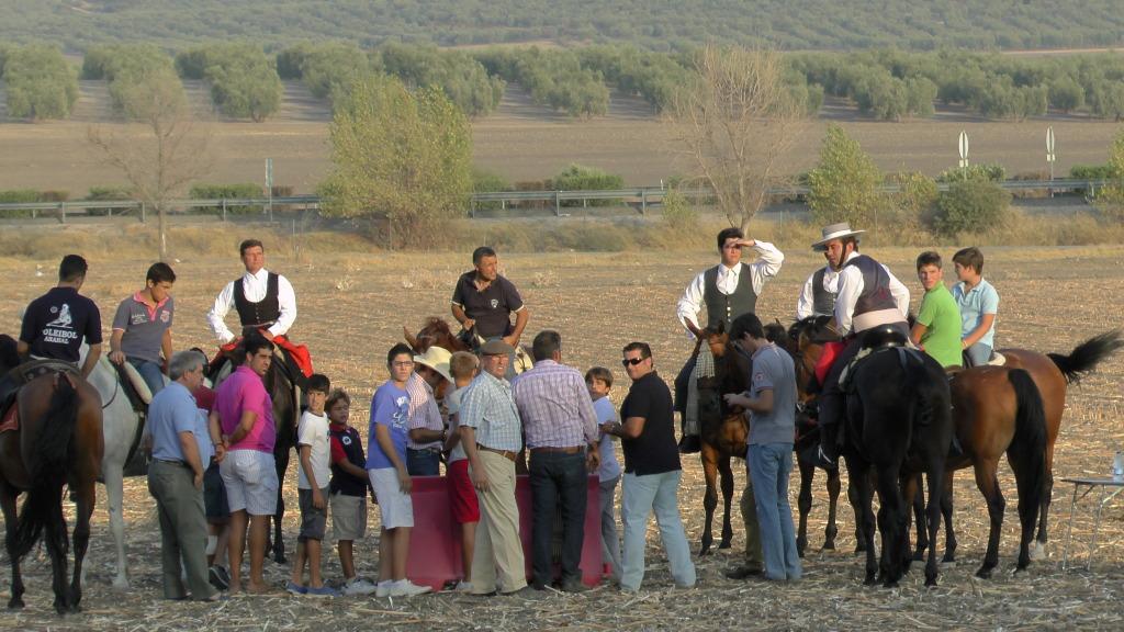 Feria Arahal 2012: Concurso de doma vaquera de caballos A8094dbd