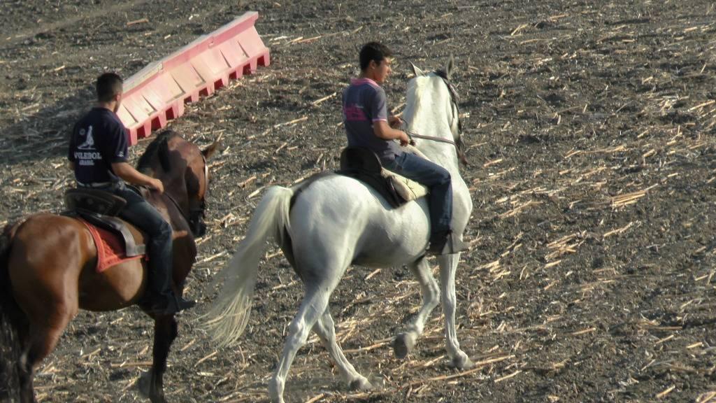 Feria Arahal 2012: Concurso de doma vaquera de caballos Ae9e89d5