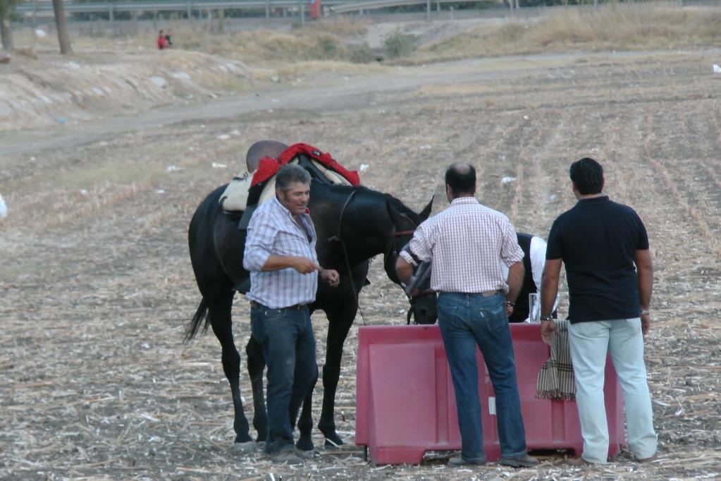 Feria Arahal 2012: Concurso de doma vaquera de caballos B6e63f49