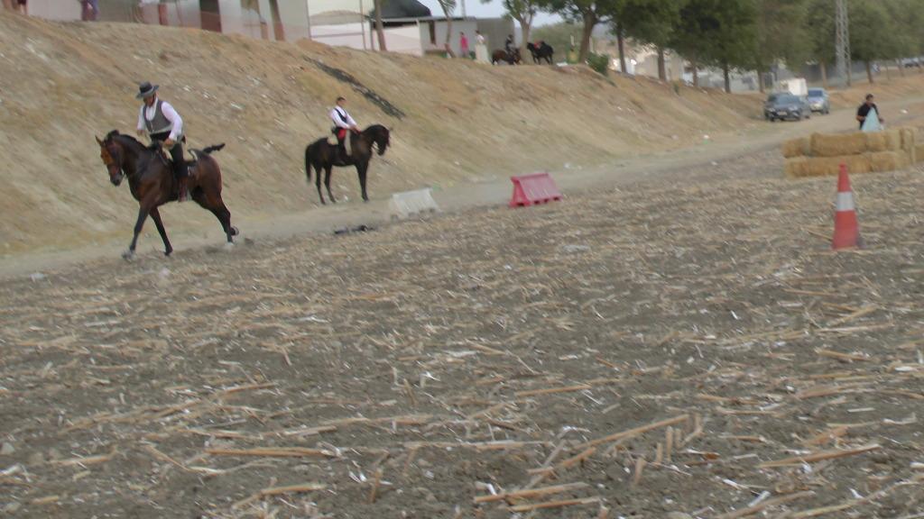 Feria Arahal 2012: Concurso de doma vaquera de caballos C5e5ffa3