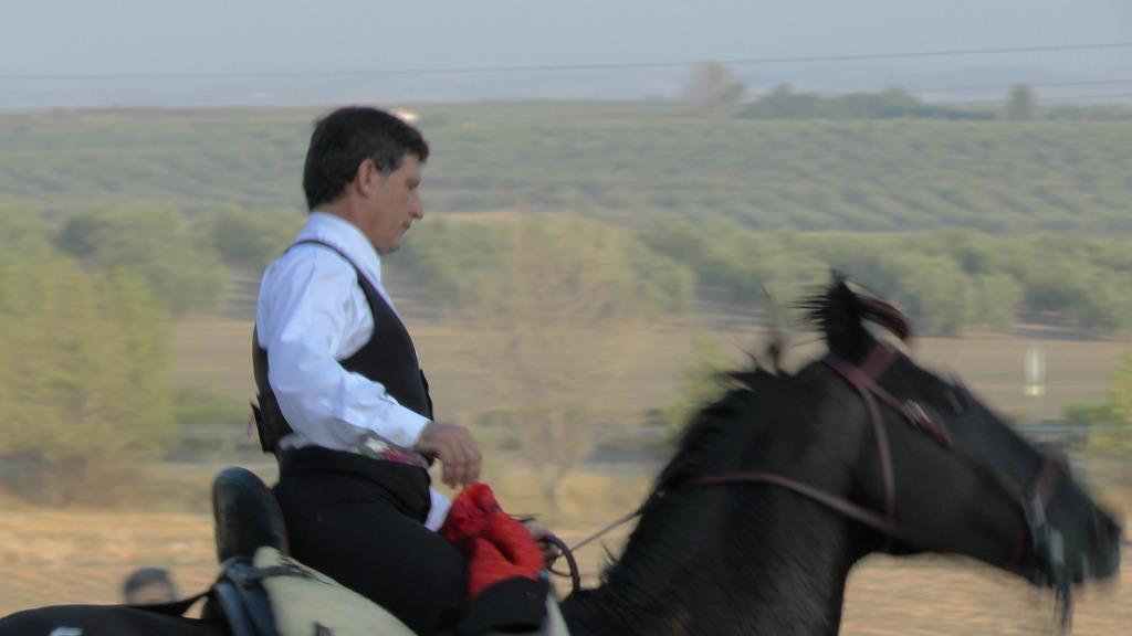 Feria Arahal 2012: Concurso de doma vaquera de caballos C8b87945