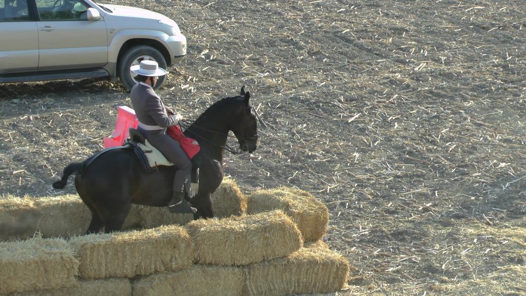 Feria Arahal 2012: Concurso de doma vaquera de caballos Fb45f6f7