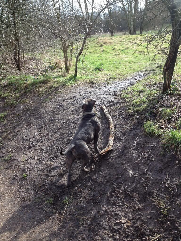 Not as big as the stick monsters (Ozzy ) Imagejpg1_zps9050cbb3