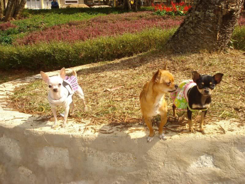 BÁN : Sunny ( màu kem ) và Tony(màu vàng ) 279531_238590016160662_100000289975798_901802_1739408_o