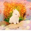 Sweet Creations *-* Cute05