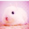 Sweet Creations *-* Cute08