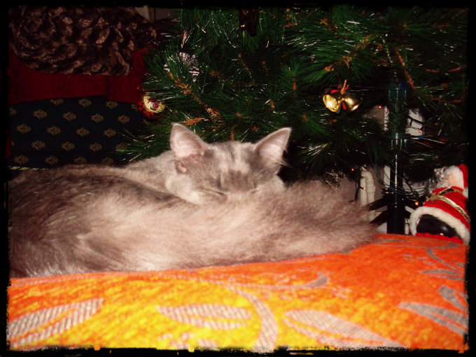 Merry Cat-mas! Botkas_Xmas2_zps7394bd2b
