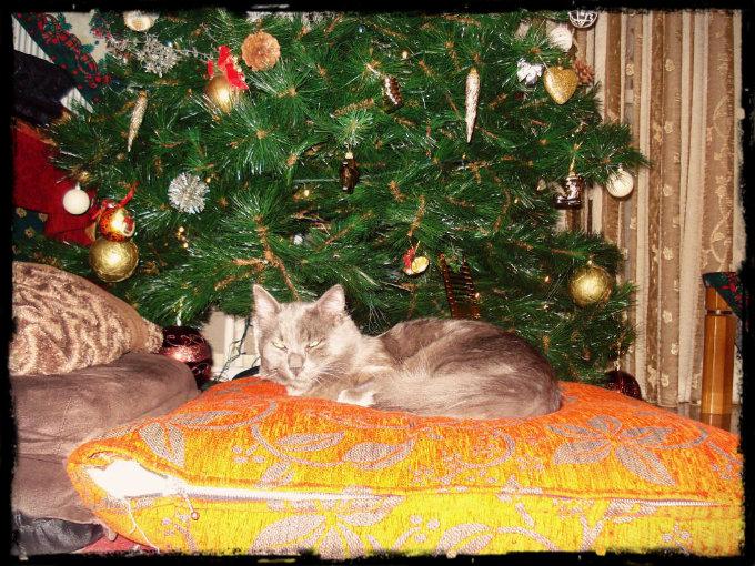 Merry Cat-mas! Botkas_Xmas_zpsb342f979