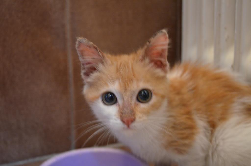 Χαρίζονται δυό πανέμορφα γατάκια DSC_0023_zpseaf6f916