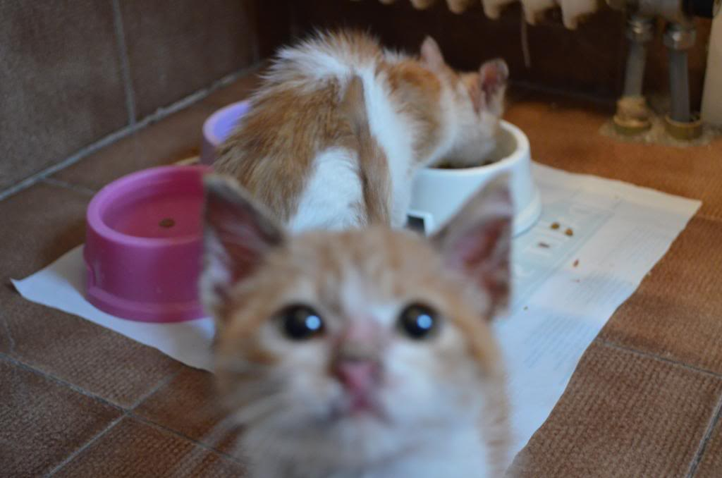 Χαρίζονται δυό πανέμορφα γατάκια DSC_0025_zps9ac25b9f