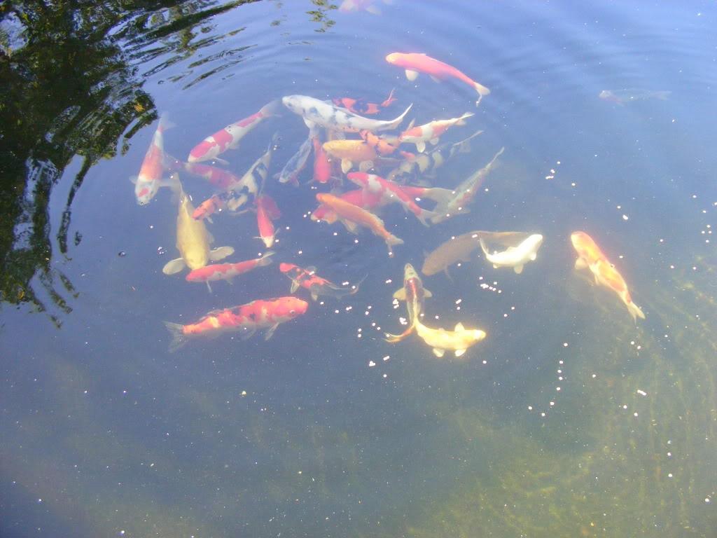 Johan en Piet van Wyk's pond. DSCF9077