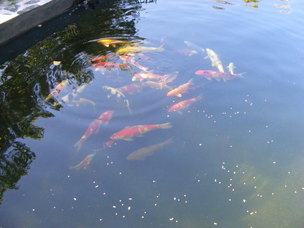 Johan en Piet van Wyk's pond. DSCF9086