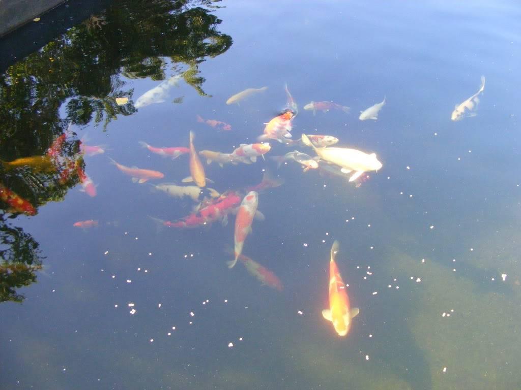 Johan en Piet van Wyk's pond. DSCF9088
