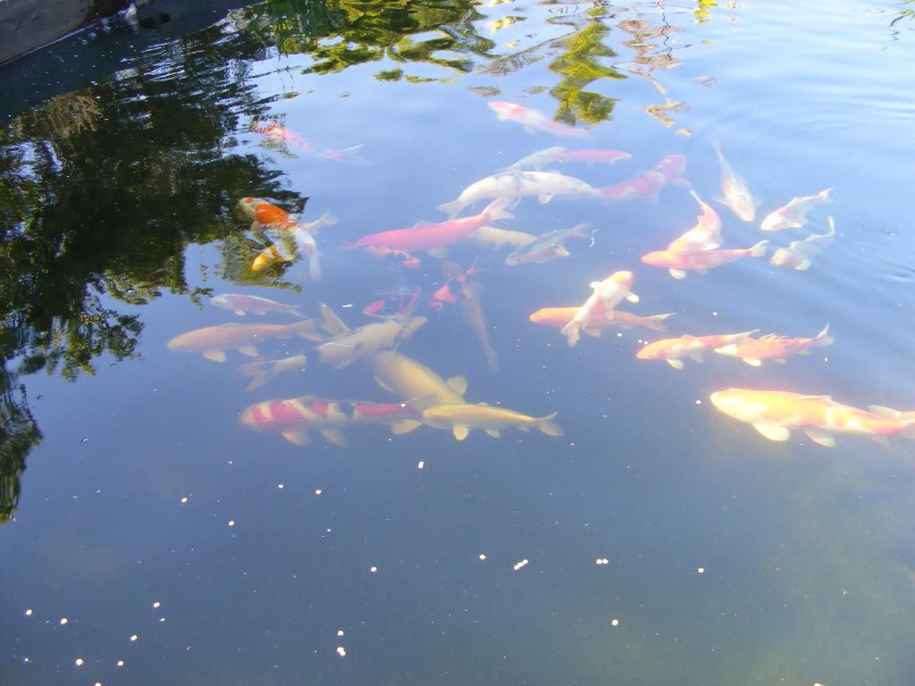 Johan en Piet van Wyk's pond. DSCF9090