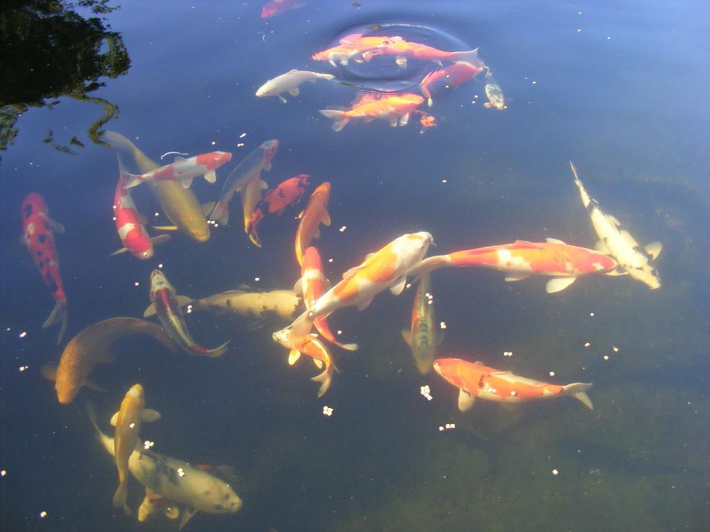 Johan en Piet van Wyk's pond. DSCF9092