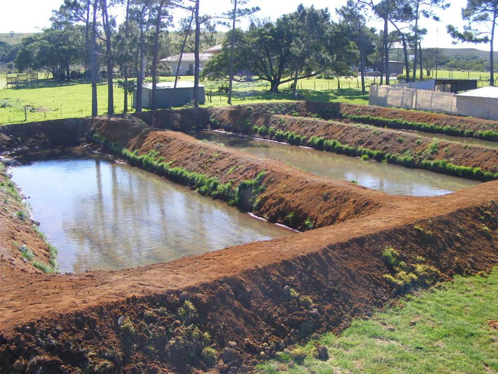 Mud Ponds.  - Page 3 DSCF9427