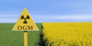 DEPOPULATION VIA LES OGM, LES PESTICIDES, LA DEFORESTATION ET LA POLLUTION DE NOTRE NOURRITURE ET DE NOS EAUX - Page 4 OGMnuclear_zps9b3ae6ce