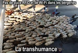 ACTIONS ET MANIFESTATIONS EN VUE... PasdepuceRFIDetdewi-fidanslesbergeries_zpscf489c36