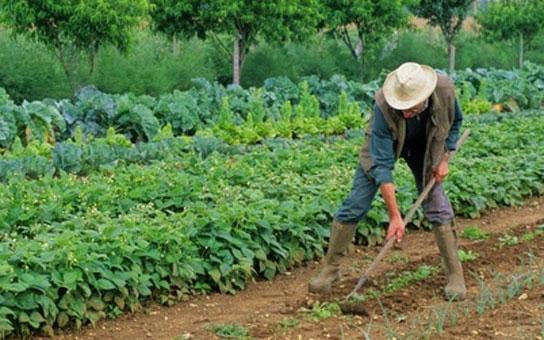 DEPOPULATION VIA LES OGM, LES PESTICIDES, LA DEFORESTATION ET LA POLLUTION DE NOTRE NOURRITURE ET DE NOS EAUX - Page 4 Potagercriminel_zps2b594f41