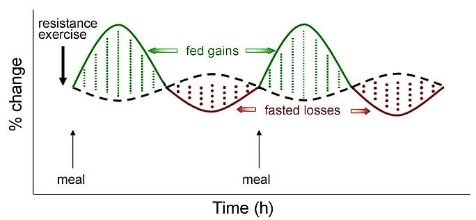 [Aporte]Post-entrenamiento sin carbohidratos. 2g
