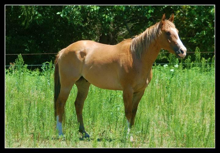 Howdy from Kansas 40045_416246608806_1482086_n_zpsf64d5345