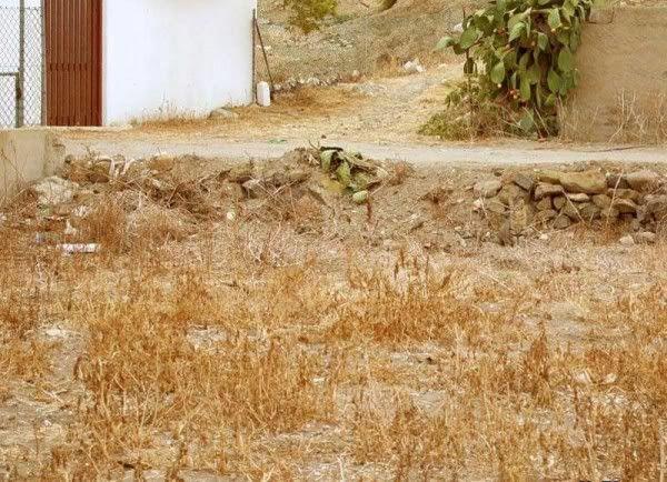 Cade o Gato ? Cadeogato