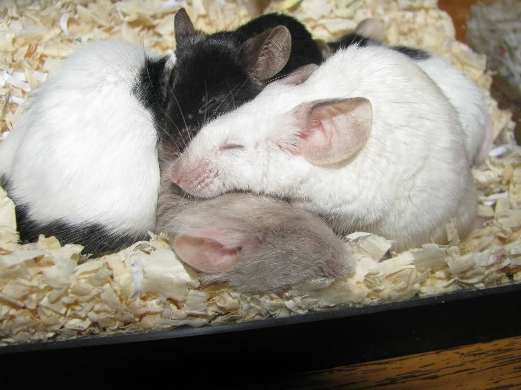 My Sleeping Beauties Picture058