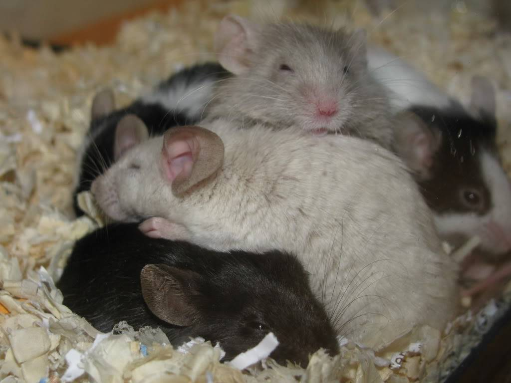 My Sleeping Beauties Picture059