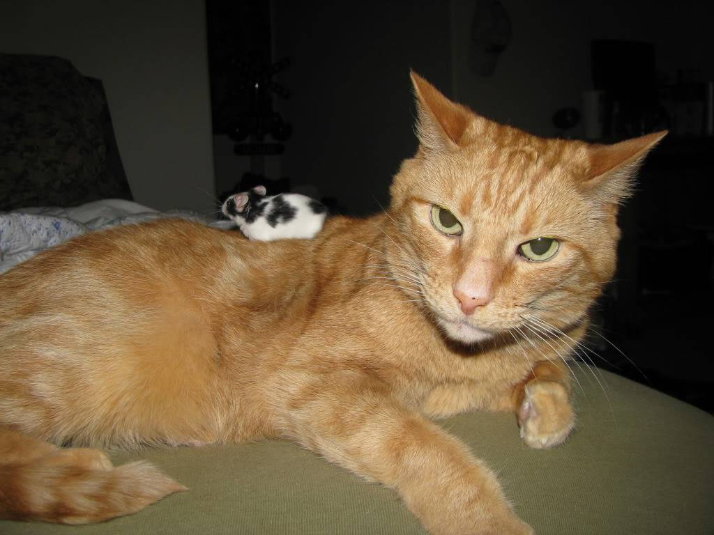 Cat & Mouse Picture022