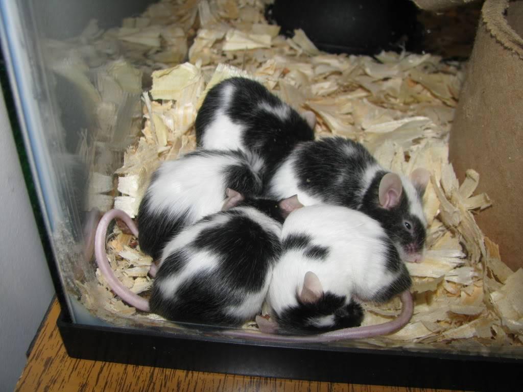 My Sleeping Beauties Picture049