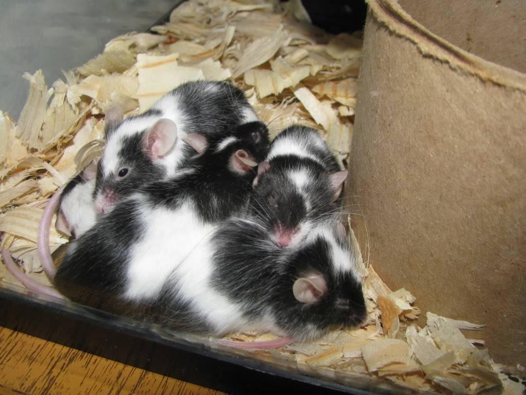 My Sleeping Beauties Picture050
