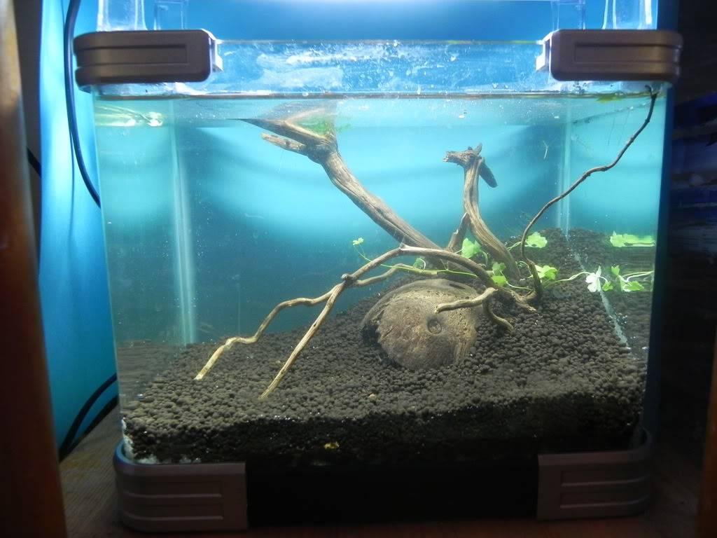 mi primer mini acuario DSCN1698