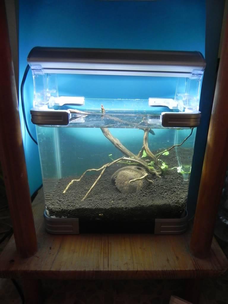 mi primer mini acuario DSCN1699