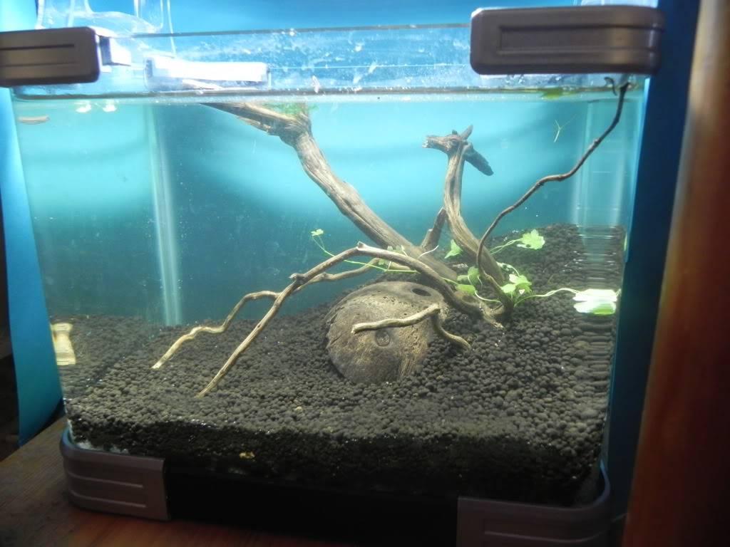 mi primer mini acuario DSCN1703